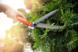 ONLINE: The 411 on Shrubs. A Presentation by Master Gardener Priscilla Husband