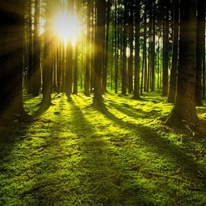 Forest Bathing: Deepening Our Relationship with Na...