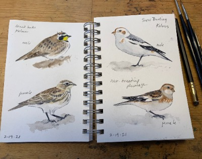 Drawing & Painting Birds, June 2021