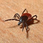 Tick Training and Lyme Disease Prevention