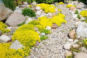 """Coffee and Mother Earth: Succeeding with Rock Gardens and """"Dry"""" Gardens! With Priscilla Husband"""