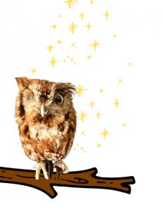 Loki the Owl