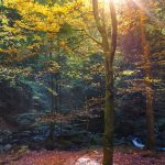 Forest Bathing Fall Sessions 2021