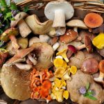 SOLD OUT! Introduction to Mushrooming with Rachel Goclawski